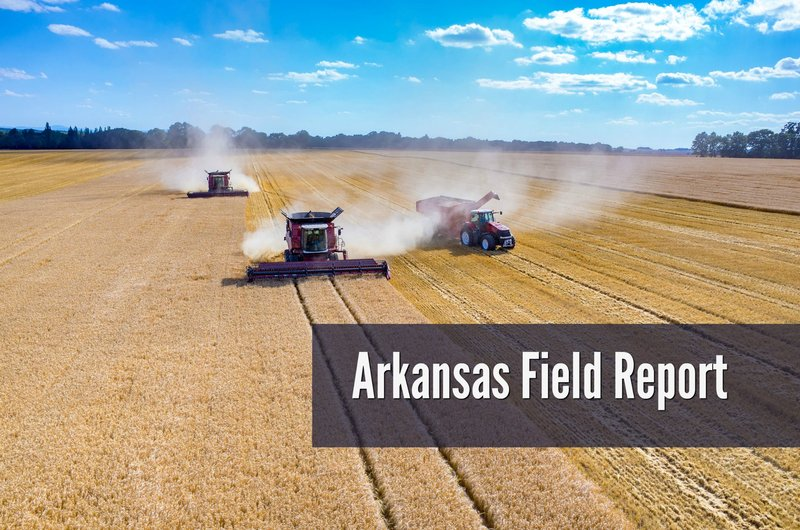 Arkansas Field Report
