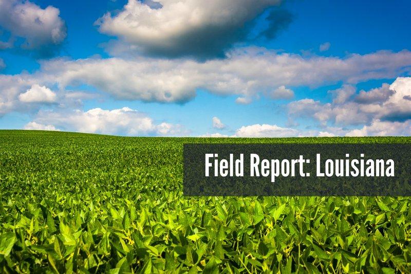 Field report LA Spring