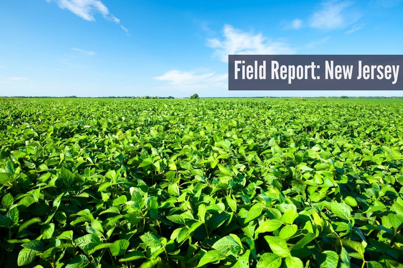 Field Report New Jersey