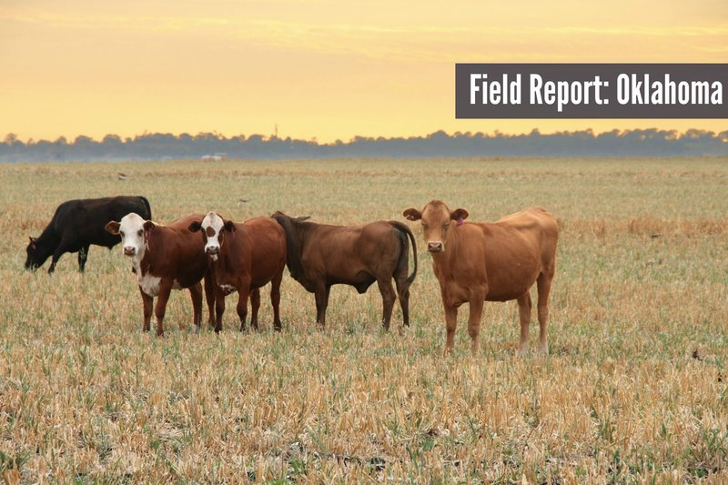 field report oklahoma