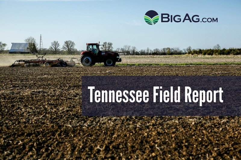 Field report: TN
